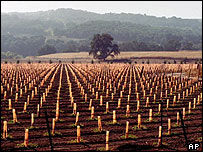 Newly planted vineyards near Templeton, California, AP