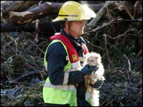 Animals were found safe amongst the debris