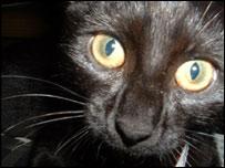A generic image of a black cat