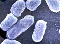 Image of E.coli