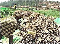 Clearing away bones after the genocide