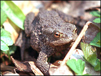 Toad (Pic courtesy of Freefoto)