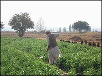 Field in Pakistan - generic picture