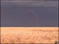 Lightning strikes near a wheat field