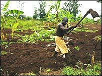 Farmer in Rwanda