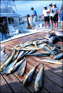 A boat unloads a catch of yellowfin tuna and dolphinfish (Folsom/NMFS/NOAA)
