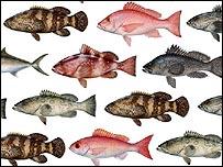 Fish species under pressure (Diane Rome Peebles)