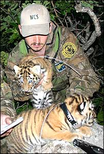 Field technician Alexander Rybin, and capture specialist Nikolai Rybin (Image: John Goodrich/Wildlife Conservation Society)