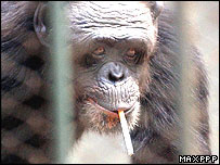 Feili smokes at her zoo in Henan, central China, August 24,2004 (Photo: MaxPPP)