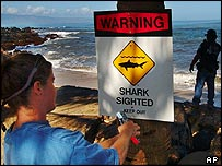 Shark warning at Kahana beach in Hawaii