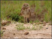 Owl (Nature)