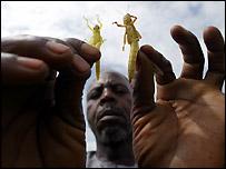 Farmer with locusts