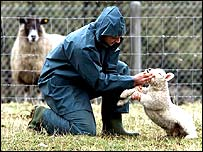 A vet working during foot-and-mouth disease