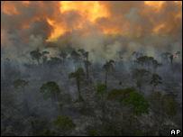 Selva amazónica incendiada.