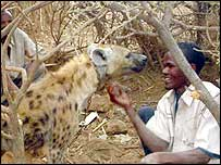 Herds boy playing with the tame hyena