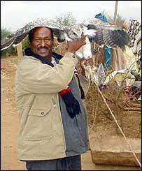 Seyyid Abdishakur with the tame hawk
