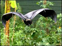 Bat with plants   Richard Wainwright