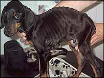 Starved puppy