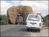 Fiat lorry carrying dried maize stalk for cattle blocks the road