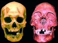 A comparison of skulls (Nerc)
