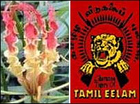 The gloriosa lily and the Tiger logo