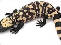 The Gila monster lizard.