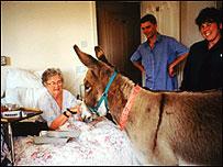 Therapy donkey visits elderly resident