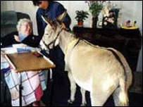 Therapy donkey