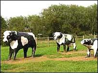 Milton Keynes's concrete cows