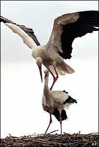 Storks generic