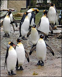 10 penguins