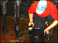 A groom girl cleans a horse
