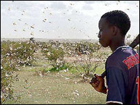boy looking at locusts