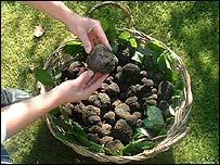 Truffles find