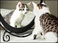 Cat clone Cc
