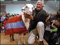 Shrek after shearing, with Bendigo Station owner John Perriam
