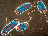 Legionella pneumophila, Science Photo Library
