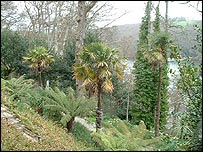 Trelissick Gardens overlooking the River Fal