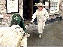 Nancy Dodd and sheep