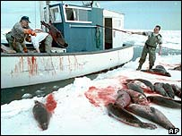 Canadian seal hunt 2004