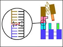 DNA walker, Nano Letters