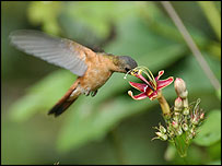 Hummingbird, Science