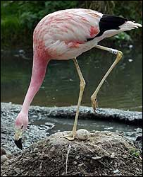 Andy the flamingo
