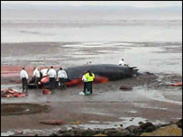 Fin whale stranded at Newport, south Wales