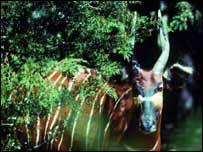 Bongo in forest   M Sanbluch/Unep