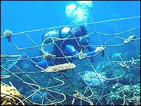 Tom Goreau (photo courtesy of the Global Coral Reef Alliance)