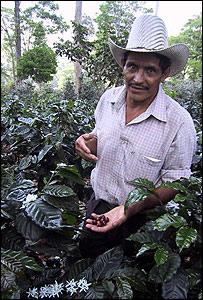 Coffee grower in Honduras
