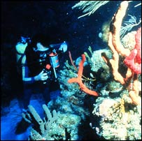 Diver on coral reef, Kesling/OAR/Nurp/Uni of N.Carolina