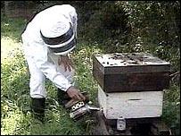 Beekeeper and hive
