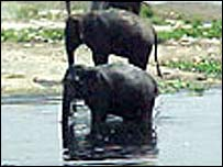 Elephants by the river